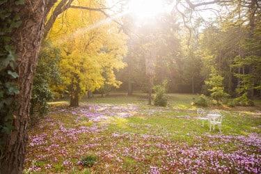Le jardin avec des essences d'arbres exotiques au domaine le Colombier à Villardonnel