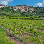 Vineyards growing in the Saint Chinian region of France