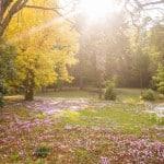 jardin arbres domaine le colombier le jeune 150x150 - Galerie de photos/archives