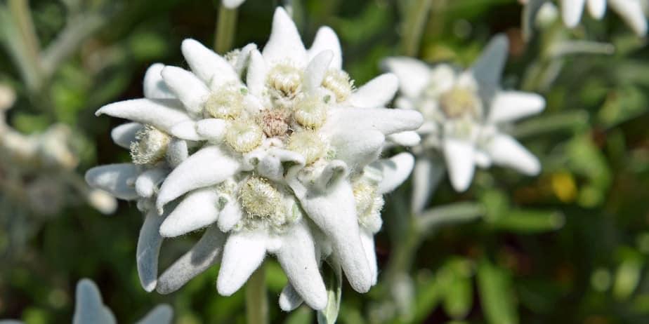 edelweiss tour du mont blanc une semaine de jeune diaporama - Tour du Mont Blanc en jeûnant