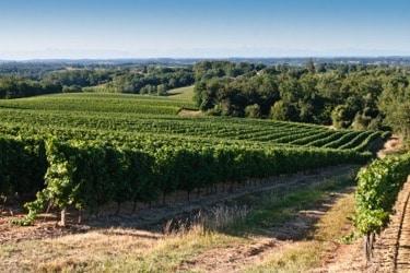 vignes gers jeune confort luxe 375x250 - Château de Guirauton - version avant avril 2019